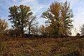 Лес в осенних красках - panoramio.jpg