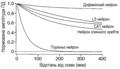 Поширення потенціалу дії в дендритах залежить від типу нейронів.png