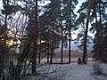 Сосновый бор прекрасен и зимой.jpg
