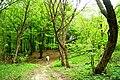 У ліс.. - panoramio.jpg