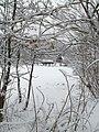Чернігів. Міський сад. Зимова пора.JPG