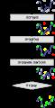 תרשים זרימה של אלגוריתם גנטי.png