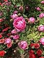 گلهای زیبای باغ ارم.jpg