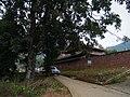 大黄花梨树 - Fragrant Rosewood - 2014.11 - panoramio.jpg