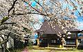 本堂 桜満開.jpg