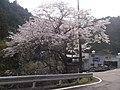 桜(貫ヶ岳登山口) - panoramio.jpg