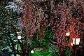 烏帽子山公園の夜桜 Cherry Flower at Night in Eboshi-yama Park - panoramio.jpg