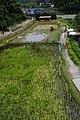 趕鴨上稼 Ducks and Rice - panoramio.jpg