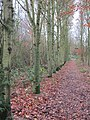-2018-12-06 Footpath, Pigney Woods, Knapton, Norfolk (2).JPG