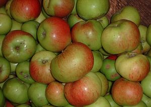 English: Bramley apple (cooking), British Colu...