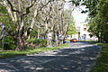 05 2012 Bystrice-pod-Hostynem pamatny-strom Platanova-alej-u-zamku.jpg