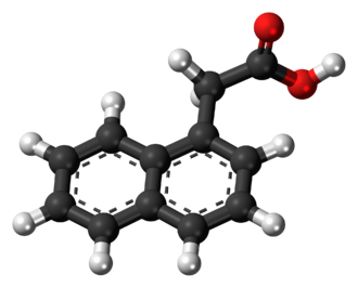 1-Naphthaleneacetic acid - Image: 1 Naphthaleneacetic acid 3D balls
