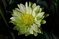 100-365 La verde flor (13764134375).jpg