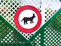 13 No dogs allowed sign hand painted in Bytom, Poland - naive art.jpg