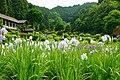 140614 Yagyu Iris Garden Nara Japan01s3.jpg