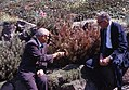 1961. Benedict (left) and Howard inspect tree killed by fumigation at Mercer Island, Washington. (34904350980).jpg