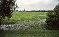 1997-07-29-Oderhochwasser-RalfR-img028.jpg