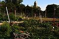 2009 community garden Chicago 3626192664.jpg