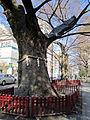 20110404-Ohkunitama-Jinja-iriguchi02.jpg