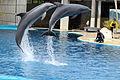 2012-05-01 Dolphin Show Madrid anagoria.JPG