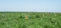 2013 - Cimitirul vechi al fostului sat Filiu, comuna Bordei Verde.png