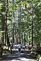 2013 Longmire Campground Opening 8 (9010527315).jpg