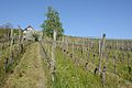 2014-04-17 14-33-53 Switzerland Kanton Schaffhausen Dörflingen Dörflingen.JPG