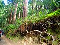 2016 Muir Woods National Monument P3301138.jpg