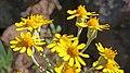 2017.06.05 10.06.09 IMG 0443 - Flickr - andrey zharkikh.jpg