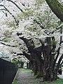 2 Chome Aoyama, Morioka-shi, Iwate-ken 020-0133, Japan - panoramio.jpg