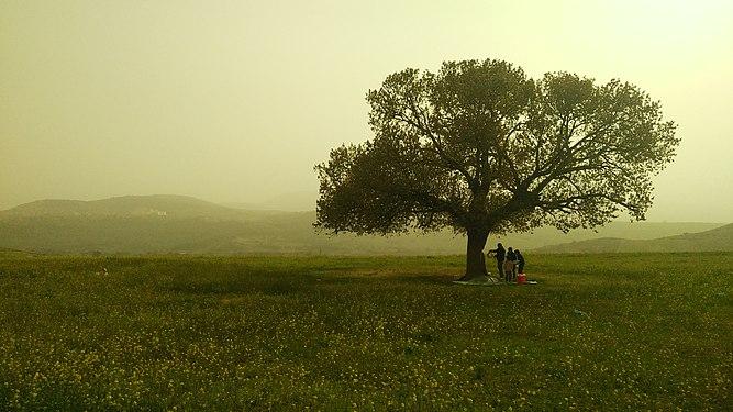 5أولاد ميمون، تلمسان،الجزائر.jpg