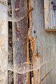 8556viki Budynek bramny pałacu Krobielowice. Foto Barbara Maliszewska.jpg