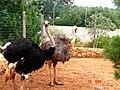 A@a paphos animal ^ bird park Agios Georgios paphos cy - panoramio (10).jpg