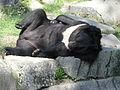 A Silesian Zoological Garden abrah 38.JPG