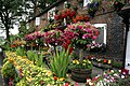 A blooming,terrace - geograph.org.uk - 1706333.jpg
