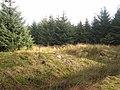 A corner of Kershope Forest - geograph.org.uk - 683458.jpg