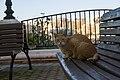 A feral cat in Malta-2016-12-25-2.jpg
