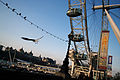 A london zum london eye gull.JPG