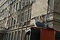A seagull in Varna, Bulgaria.jpg