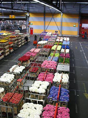 Floristry - Flower market in Aalsmeer