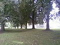 Abington Park - geograph.org.uk - 2056708.jpg