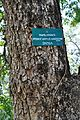 Acharya Jagadish Chandra Bose Indian Botanic Garden - Howrah 2011-01-08 9820.JPG