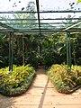 Acharya Jagadish Chandra Bose Indian Botanic Garden - Howrah 2011-03-20 2065.JPG