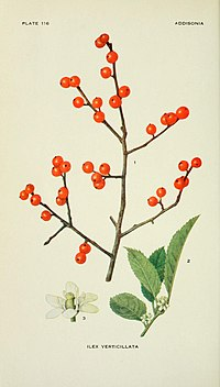 Addisonia - colored illustrations and popular descriptions of plants (1916-(1964)) (16746916576).jpg