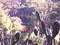 Adentrandoce en los jardínes- arboretum lussich.JPG