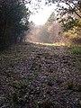 Afternoon Mist in Botley Woods - geograph.org.uk - 89688.jpg