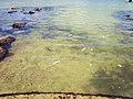 Aguas de la Bahía de Chetumal, Q.Roo - panoramio.jpg