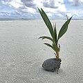 Aitutaki Beach by Nick Longrich.jpg