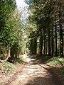 Alderholt, plantation - geograph.org.uk - 1245545.jpg