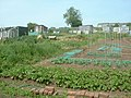 Allotments in Pound Lane - geograph.org.uk - 1063093.jpg